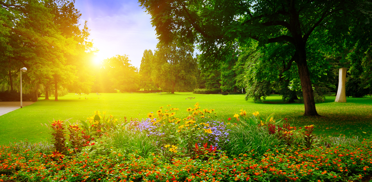 summer-park-with-beautiful-flowerbeds